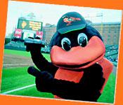 The Baltimore Oriole